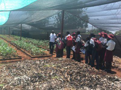Zimbabwe Nutrition Gardens
