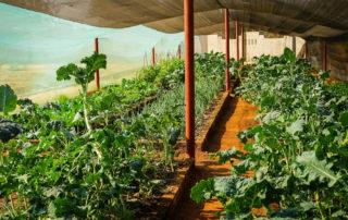Victoria Falls Nutrition Garden
